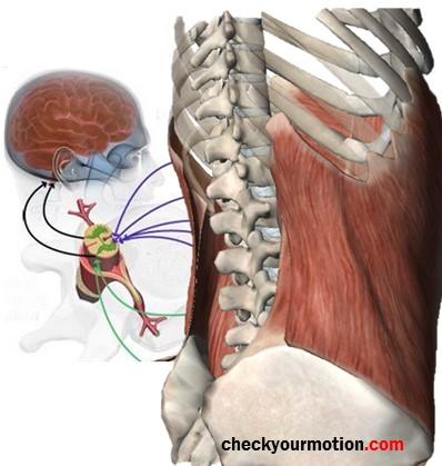 fisioterapia deportiva propioreceptores