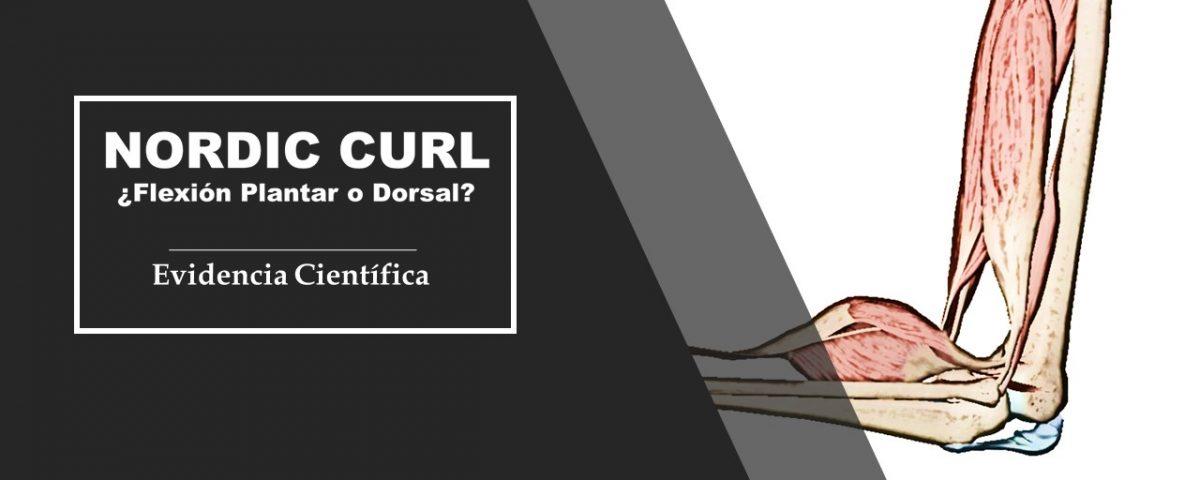 Flexion dorsal del tobillo y Curl Nordico