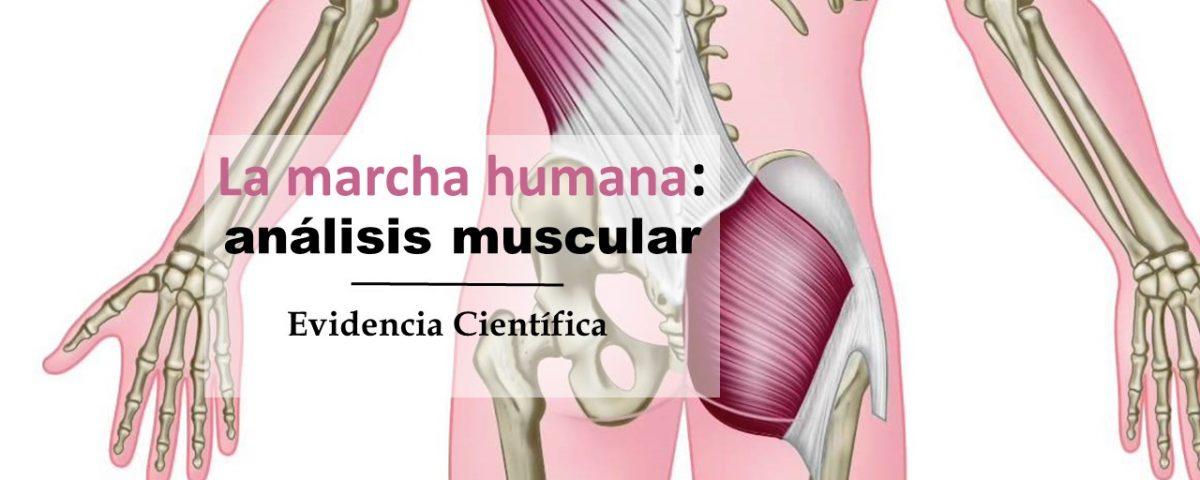 La marcha humana: análisis muscular - Check your motion