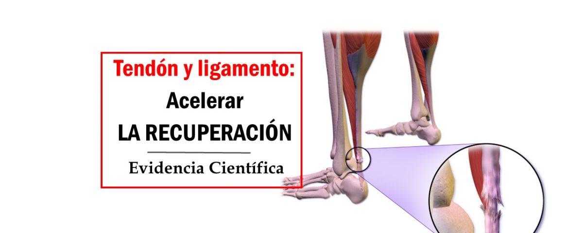 Acelerar la regeneración de tendones y ligamentos - Check your motion