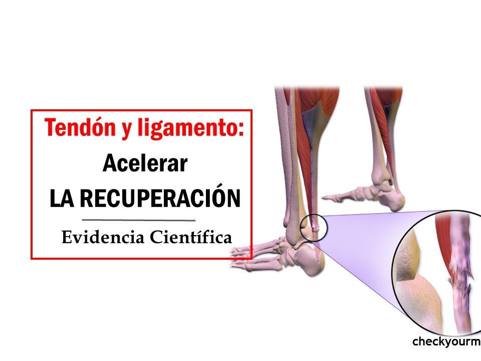 Acelerar la regeneración de tendones y ligamentos