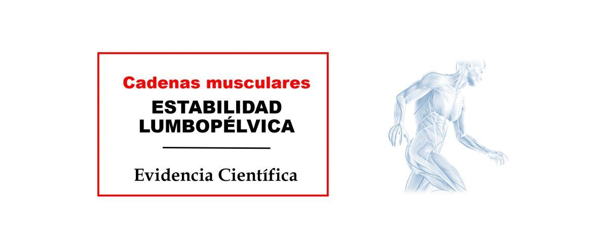Estabilidad lumbopelvica cadenas musculares