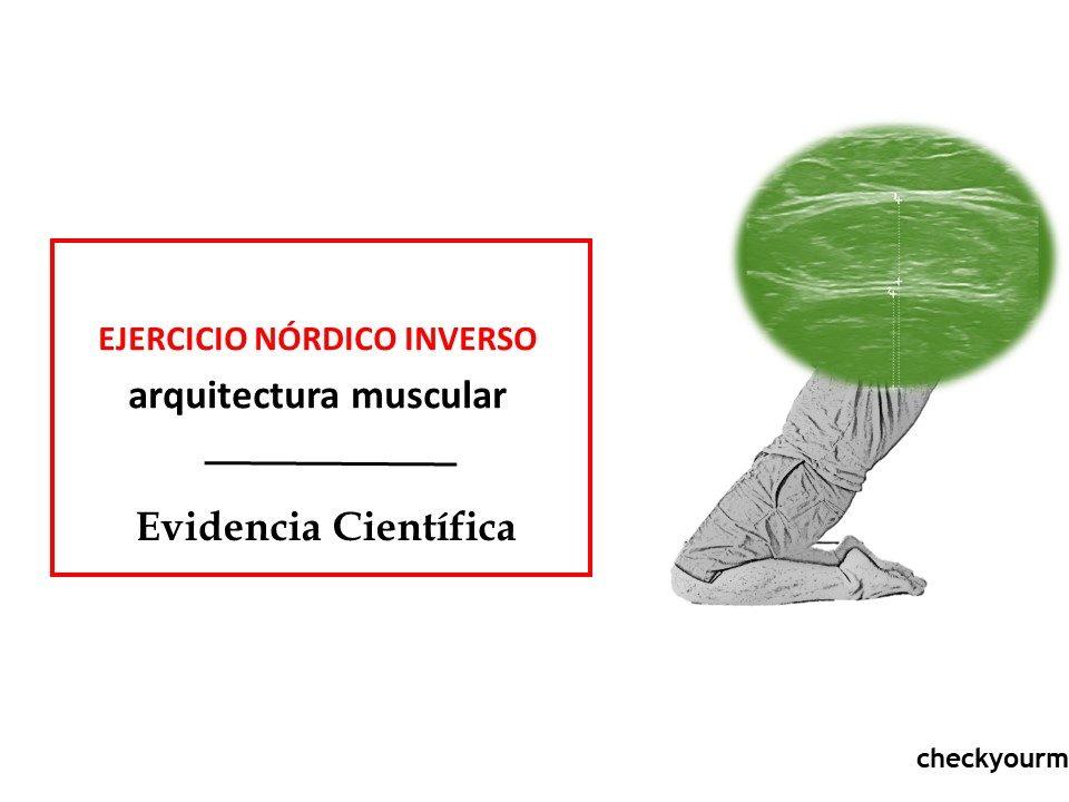 ejercicio nórdico inverso