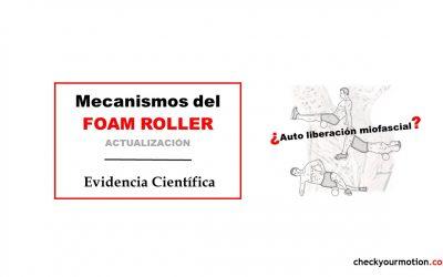Revisión científica sobre los mecanismos del foam roller: autoliberación miofascial
