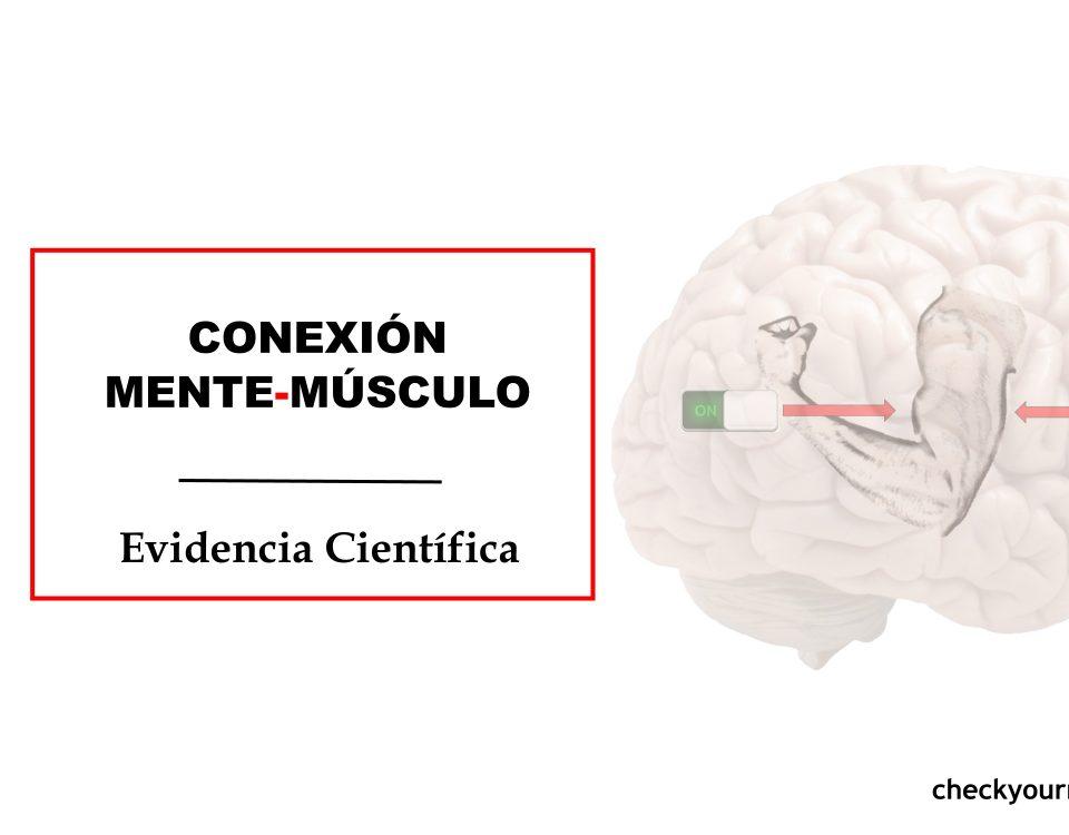 Cómo conseguir la conexión mente-músculo